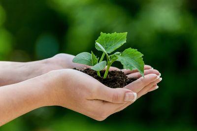 Sächsische Ärzteversorgung Hände neue Pflanze