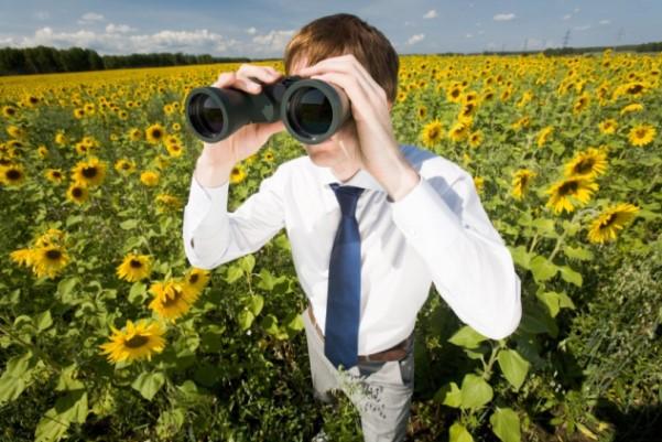 Mann mit Fernglas im Sonnenblumenfeld